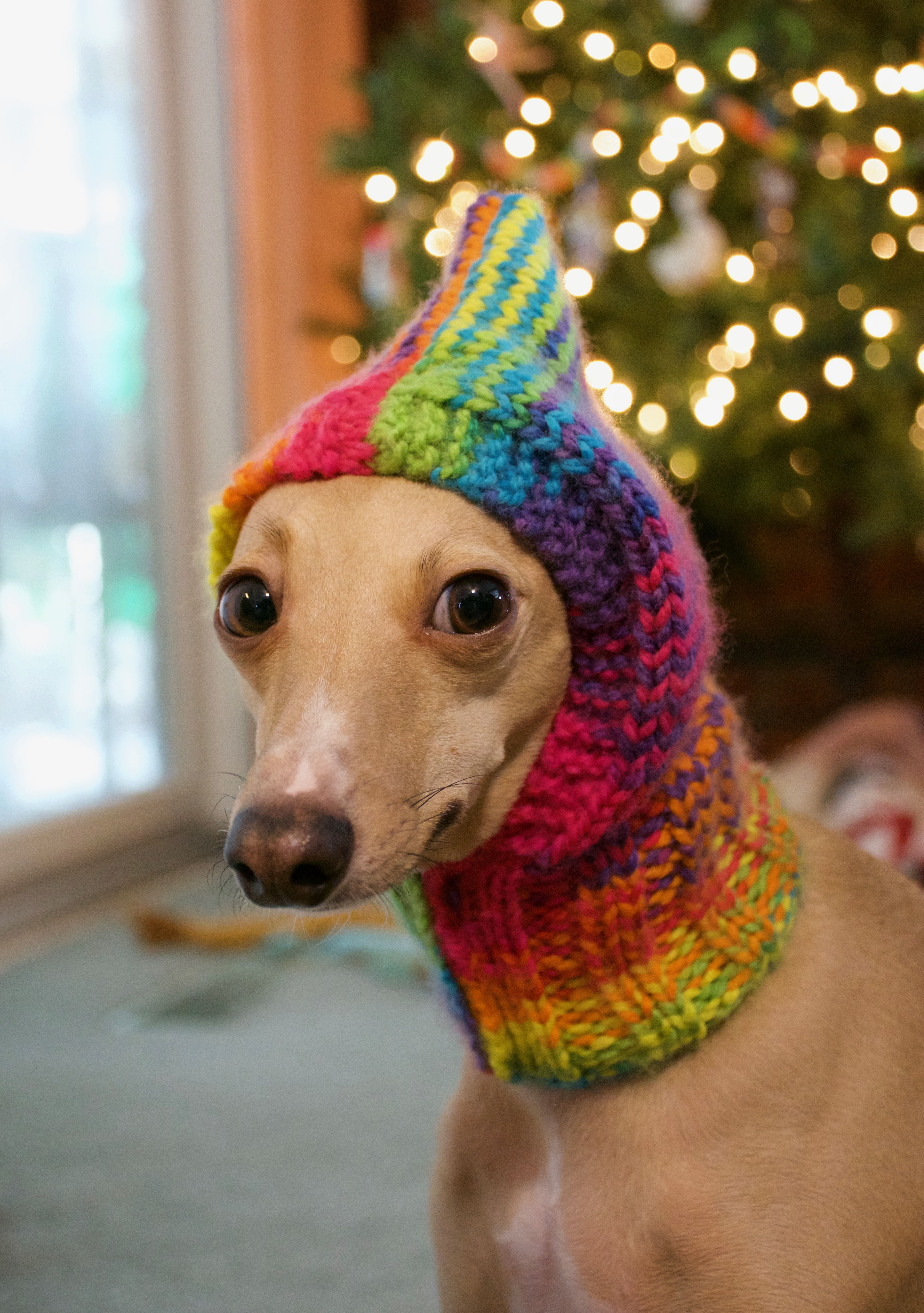 Luxury the Francesca Snood Hand Knit Dog Hat Pattern Available Knitted Dog Hats Of Innovative 49 Images Knitted Dog Hats