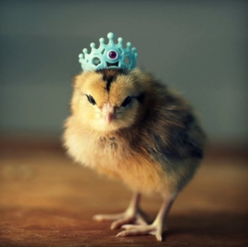 Luxury top 10 Baby Chicks In Hats Baby Chicken Hat Of Elegant Grapher Takes Inspiration From Daughter 7 to Dress Baby Chicken Hat