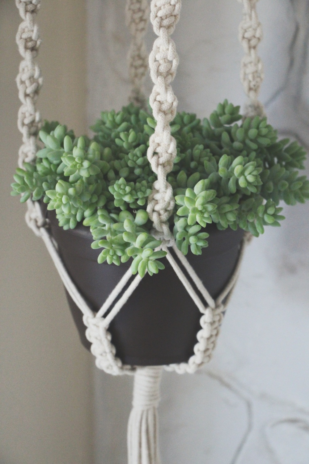 Macrame Plant Hanger Elegant Our First Giveaway — Needles Leaves Of Attractive 42 Pics Macrame Plant Hanger
