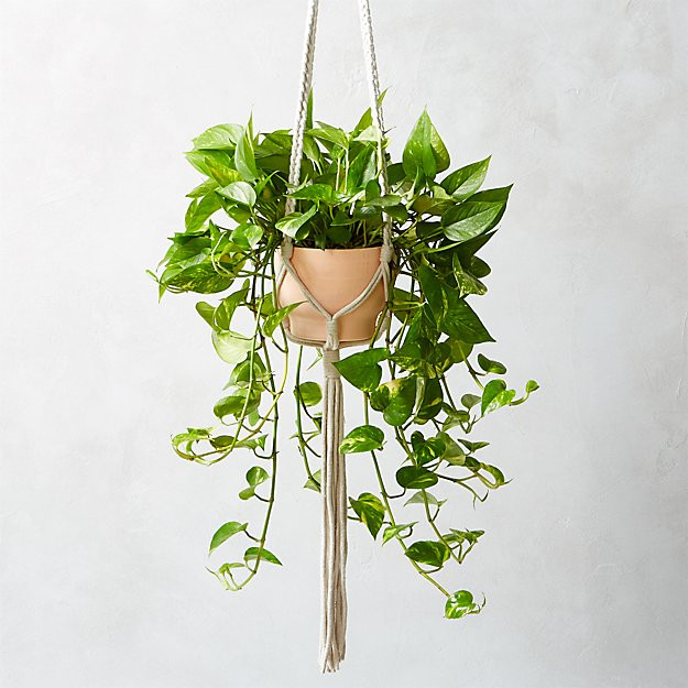 Macrame Plant Holder Elegant Macramé Plant Holder Reviews Of Luxury 45 Images Macrame Plant Holder