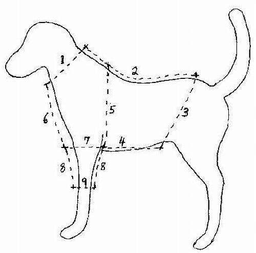 Dog Clothes Patterns on Pinterest