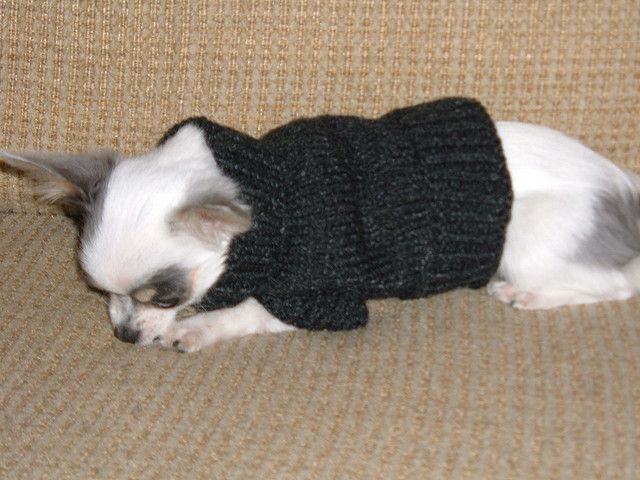 New Dog Sweater for Small Dog Free Knitting Pattern Dog Knitting Patterns Free Of Superb 44 Pictures Dog Knitting Patterns Free
