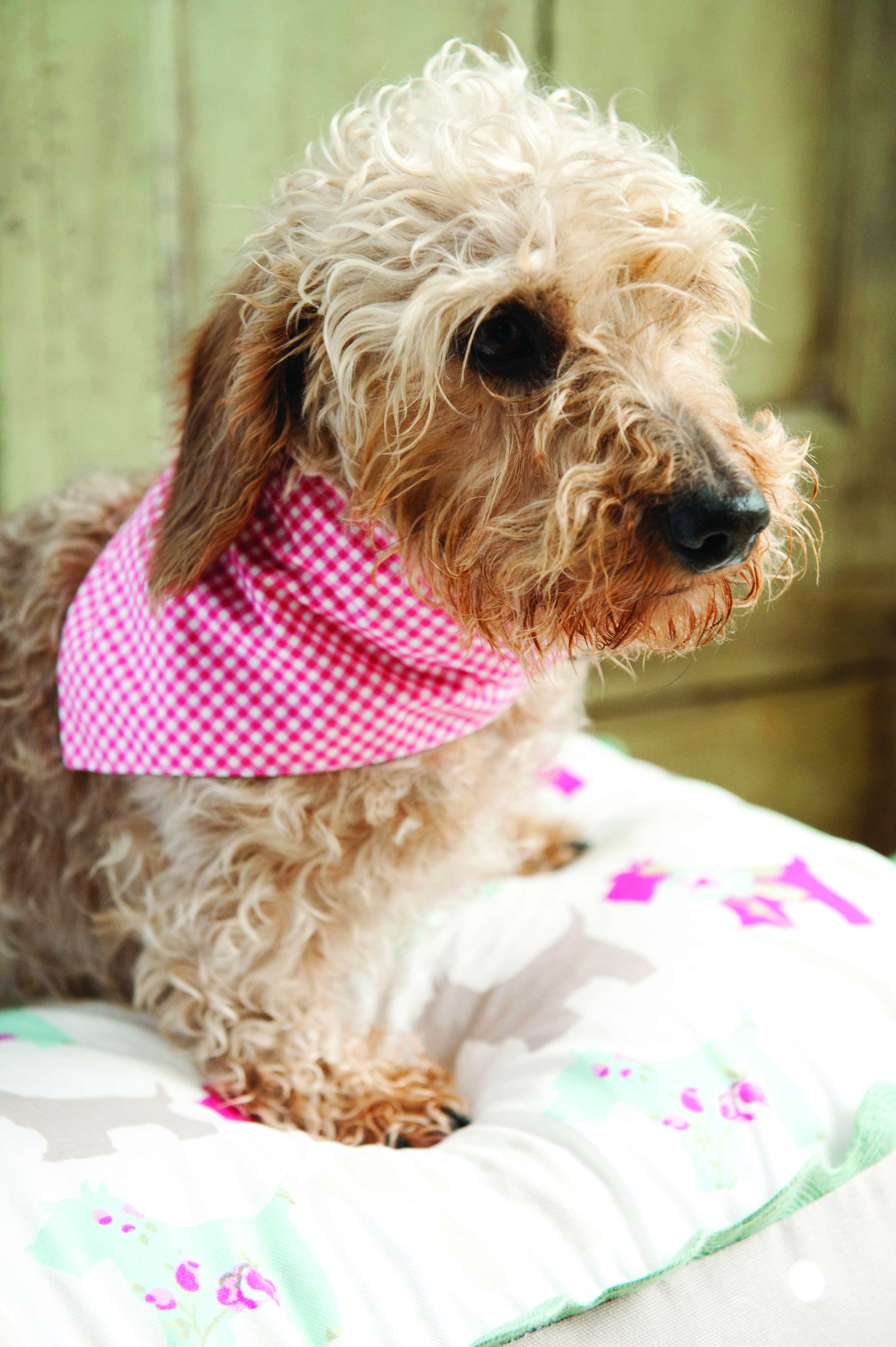 Easy Dog Bandana Sewing Pattern