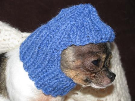 New Knitted Dog Patterns Knitted Dog Hats Of Innovative 49 Images Knitted Dog Hats