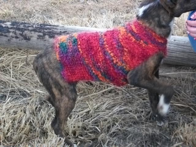New Really Easy Knit Dog Sweater In Boucle by Copper Llama Easy Knit Dog Sweater Of Charming 49 Ideas Easy Knit Dog Sweater