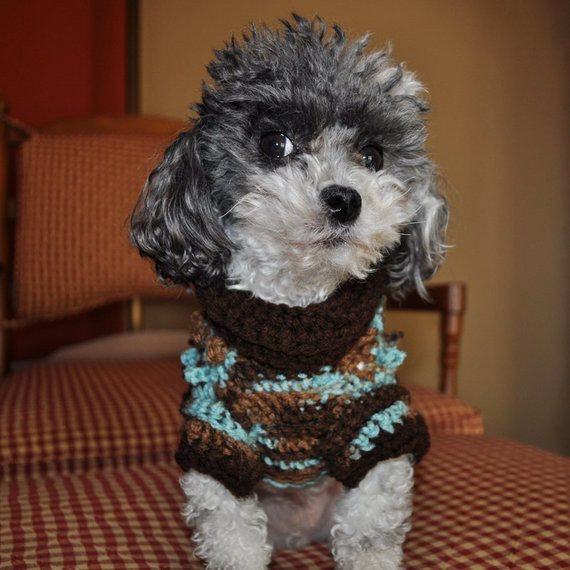 Small Dog Clothes Patterns Unique Dog Sweater Crochet Pattern Small Dog Sweater Crochet Of Contemporary 43 Ideas Small Dog Clothes Patterns