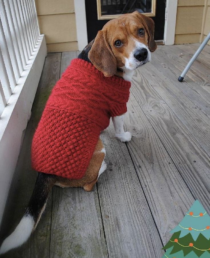 Unique 46 Best Knitting Patterns for Dogs Images On Pinterest Knitting Patterns for Dog Sweaters for Beginners Of Luxury 41 Pictures Knitting Patterns for Dog Sweaters for Beginners