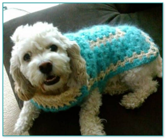 free crochet patterns for dog sweaters
