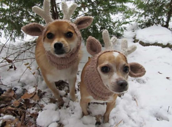 Knitted Dog Hats with Ears Easy Free Patterns