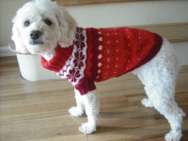 Miss Julia s Patterns Free Patterns Everything for Dogs