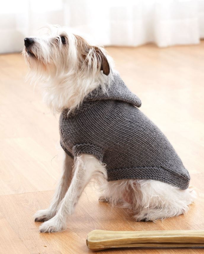 Sparky s Favorite Knit Sweater