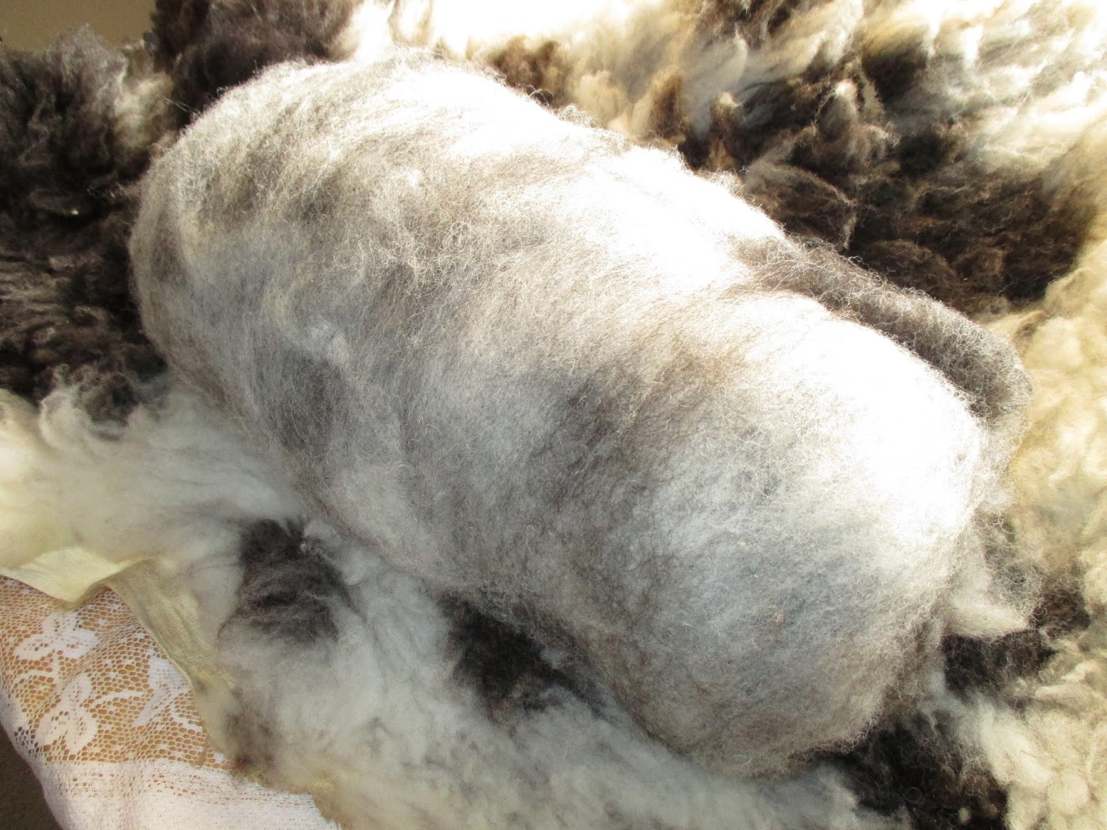Wool for Sale Awesome Spotted Sheep Shop Wool Fiber Jacob Sheep Wool Rolags Of Amazing 50 Models Wool for Sale