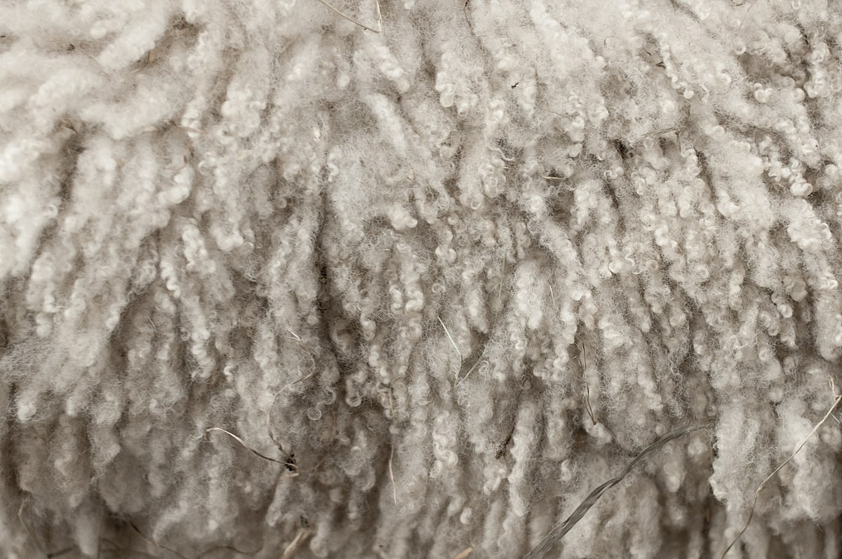 Wool for Sale Inspirational Wool Of Amazing 50 Models Wool for Sale
