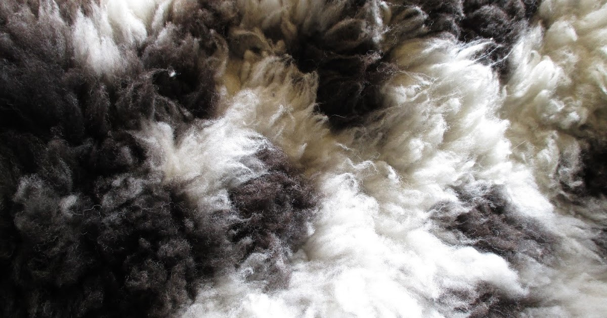 Spotted Sheep Shop Wool Fiber Jacob Sheep Wool Rolags